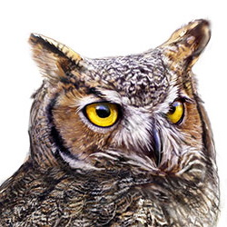 Great Horned Owl Head Illustration