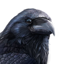 Common Raven Head Illustration