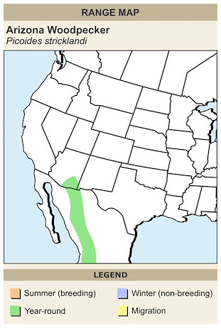 CERange Map for Arizona Woodpecker