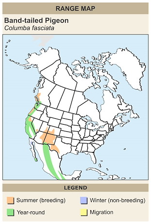 CERange Map for Band-tailed Pigeon