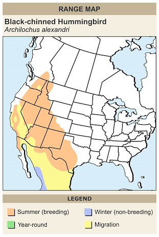 CERange Map for Black-chinned Hummingbird
