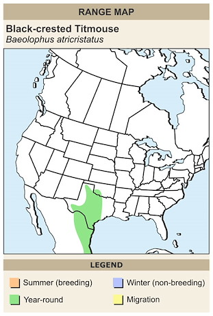 CERange Map for Black-crested Titmouse