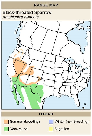 CERange Map for Black-throated Sparrow