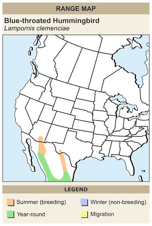 CERange Map for Blue-throated Hummingbird
