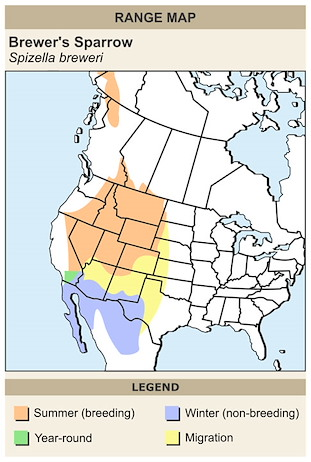 CERange Map for Brewer's Sparrow