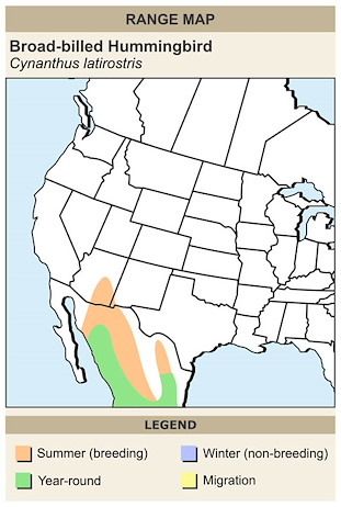 CERange Map for Broad-billed Hummingbird