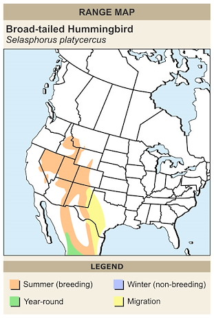 CERange Map for Broad-tailed Hummingbird