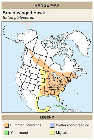 CERange Map for Broad-winged Hawk