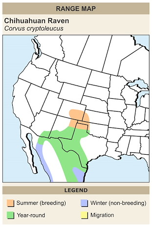 CERange Map for Chihuahuan Raven