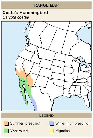 CERange Map for Costa's Hummingbird