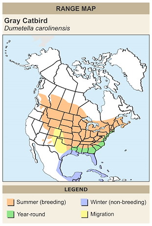 CERange Map for Gray Catbird