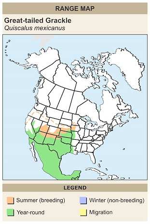 CERange Map for Great-tailed Grackle