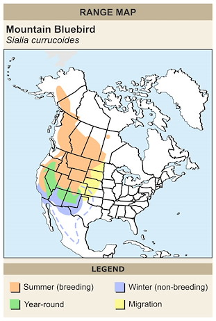 CERange Map for Mountain Bluebird