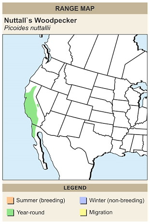 CERange Map for Nuttall's Woodpecker