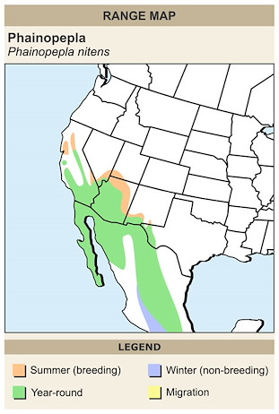 CERange Map for Phainopepla