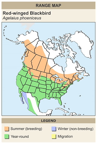 CERange Map for Red-winged Blackbird