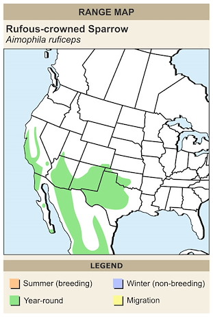 CERange Map for Rufous-crowned Sparrow