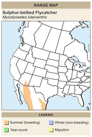 CERange Map for Sulphur-bellied Flycatcher
