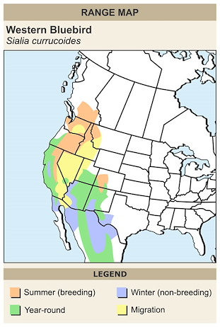 CERange Map for Western Bluebird
