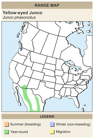 CERange Map for Yellow-eyed Junco