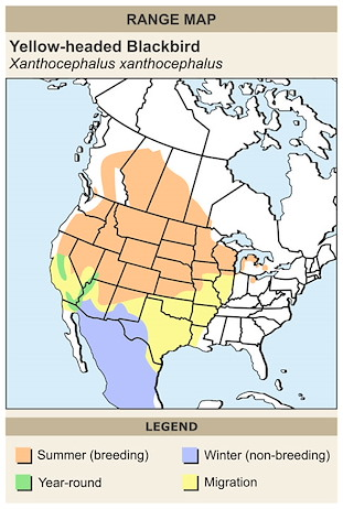 CERange Map for Yellow-headed Blackbird