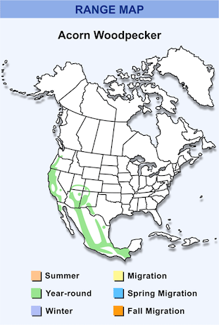 Range Map for Acorn Woodpecker HD