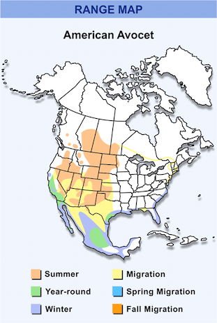 Range Map for American Avocet HD