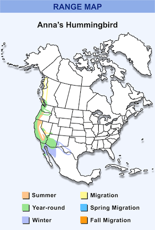 Range Map for Anna's Hummingbird HD