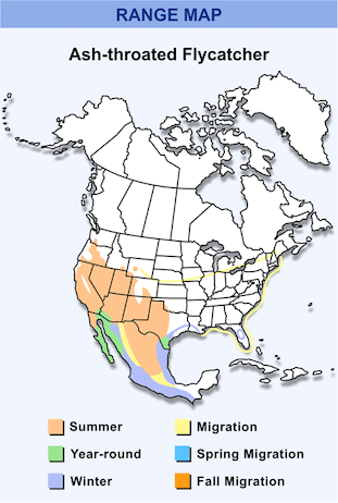 Range Map for Ash-throated Flycatcher HD