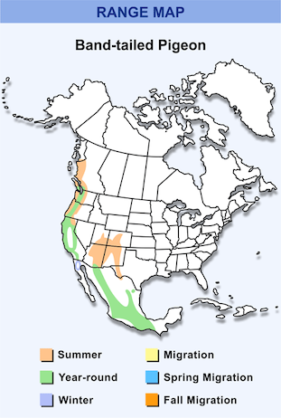 Range Map for Band-tailed Pigeon HD