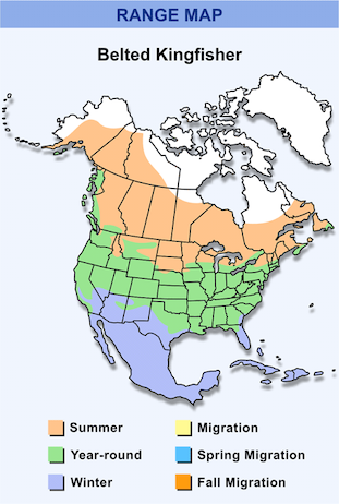 Range Map for Belted Kingfisher HD
