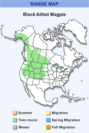 Range Map for Black-billed Magpie HD