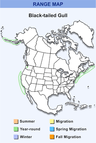 Range Map for Black-tailed Gull HD