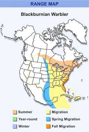 Range Map for Blackburnian Warbler HD