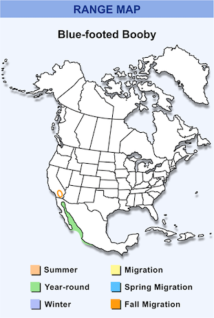 Range Map for Blue-footed Booby HD