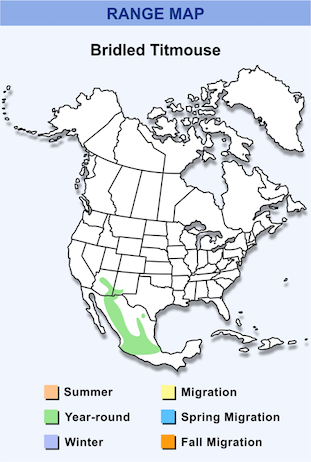 Range Map for Bridled Titmouse HD