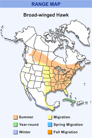 Range Map for Broad-winged Hawk HD