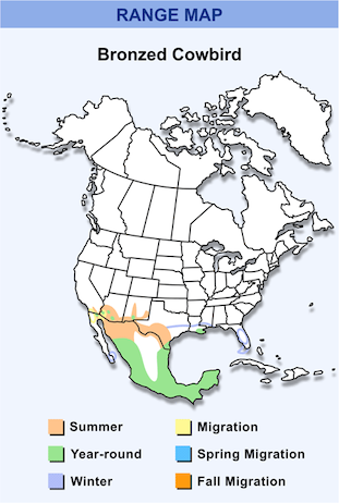 Range Map for Bronzed Cowbird HD