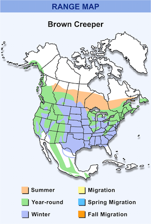 Range Map for Brown Creeper HD