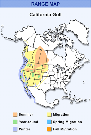 Range Map for California Gull HD