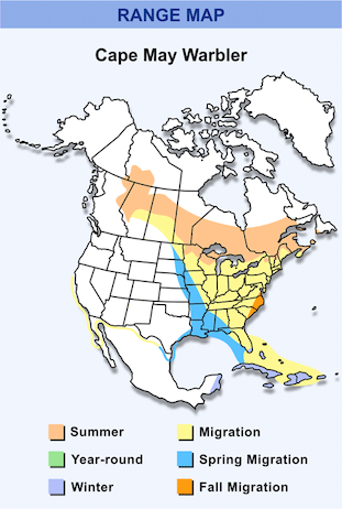 Range Map for Cape May Warbler HD