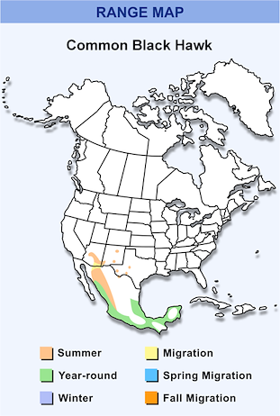 Range Map for Common Black Hawk HD.png