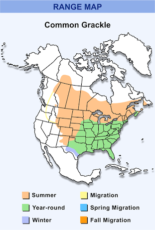 Range Map for Common Grackle HD