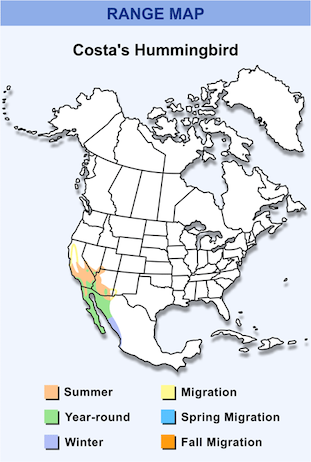 Range Map for Costa's Hummingbird HD