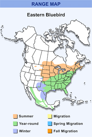 Range Map for Eastern Bluebird HD