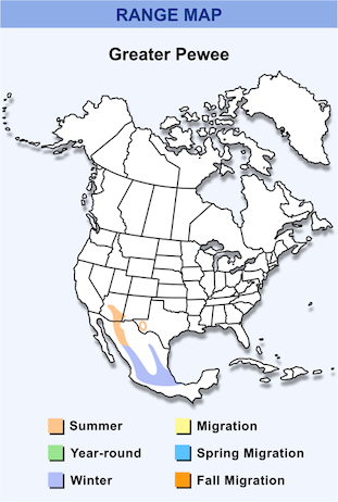 Range Map for Greater Pewee HD