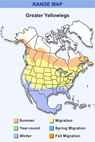 Range Map for Greater Yellowlegs HD