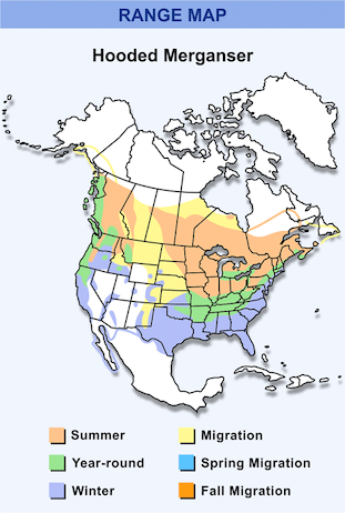 Range Map for Hooded Merganser HD