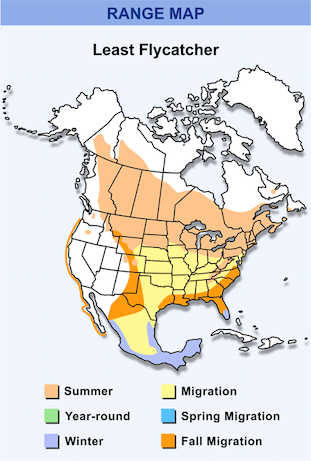 Range Map for Least Flycatcher HD