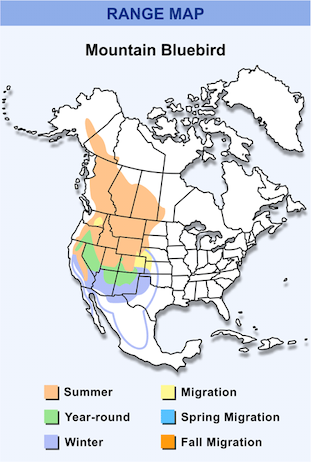 Range Map for Mountain Bluebird HD
